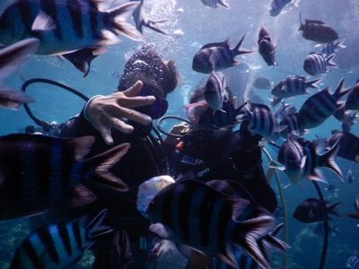 830_Diving__32.JPG