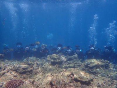 830_Diving__80.JPG